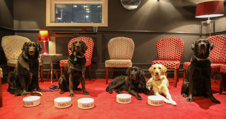 Manchester Opera House offered visually impaired guests and their dogs a night at the theatre