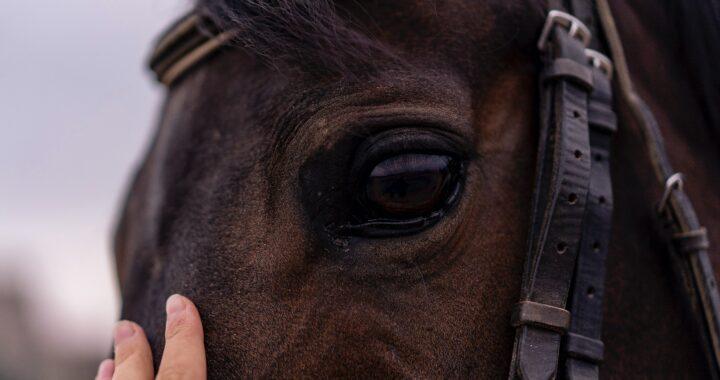 UK's Biggest Horse-Racing Festivals for a Hippophile